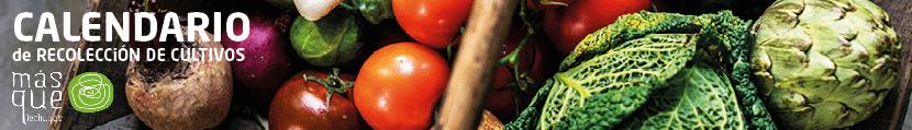 Calendario de cultivos ecologicos de temporada